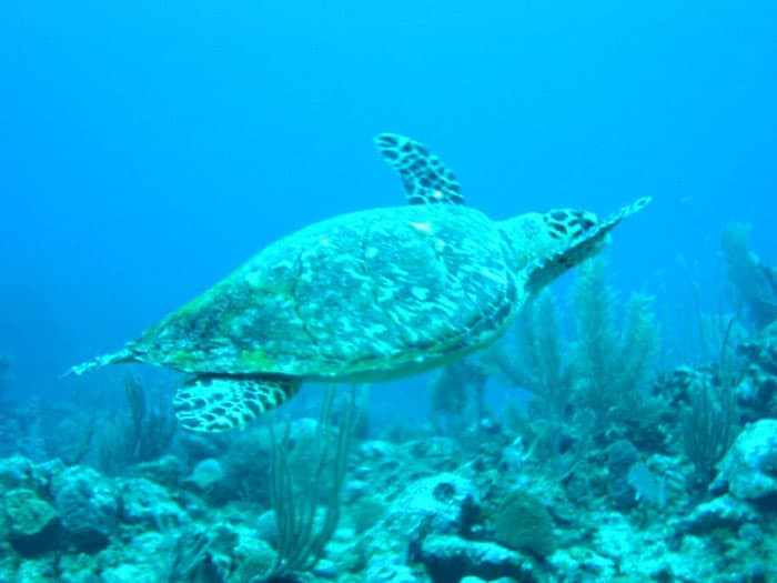 Marine life!