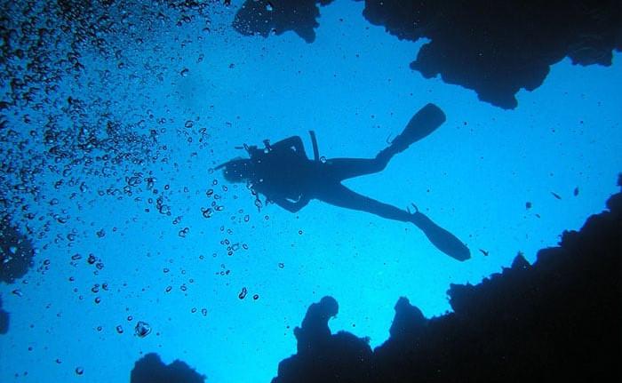 Book a dive trip!