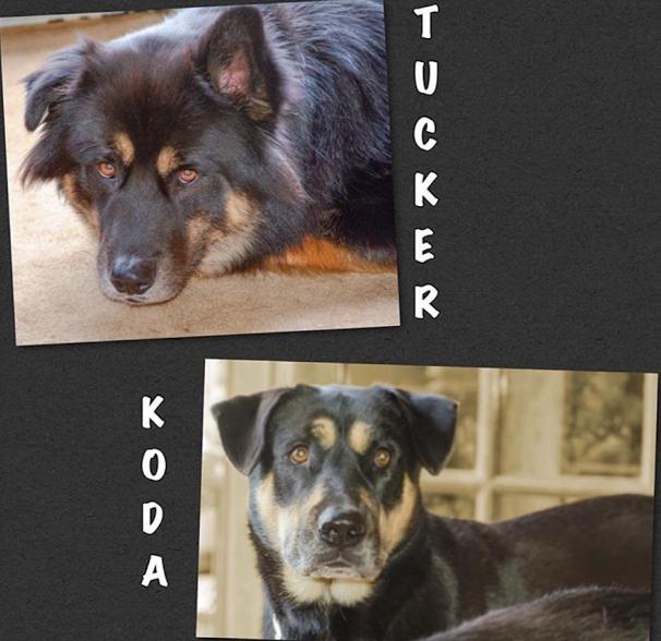 Tucker & Koda