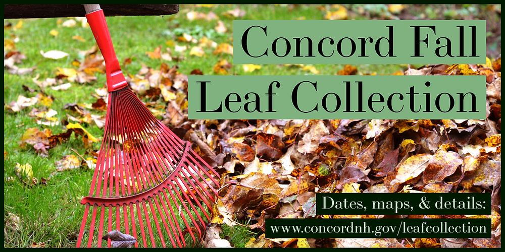 Concord Fall Leaf Collection