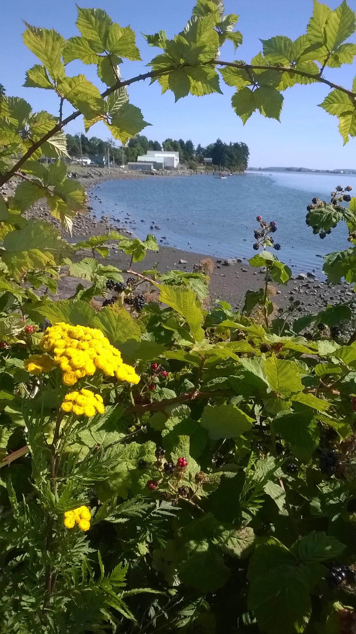 Samish Island in Washington State