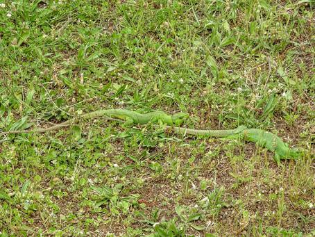 Balkan Green? Or plain, old regular green?