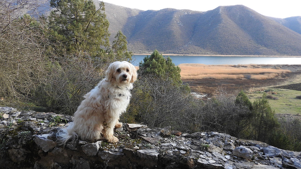 Nefeli.  Adorable, but not the world's greatest tracking dog.