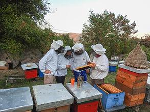 Bees Dihovo.jpg