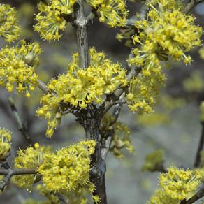April's plant highlights