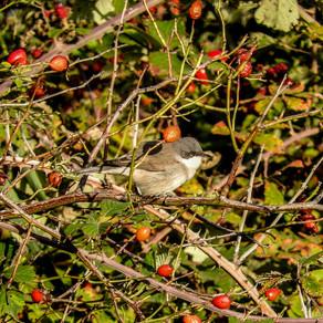 September birds