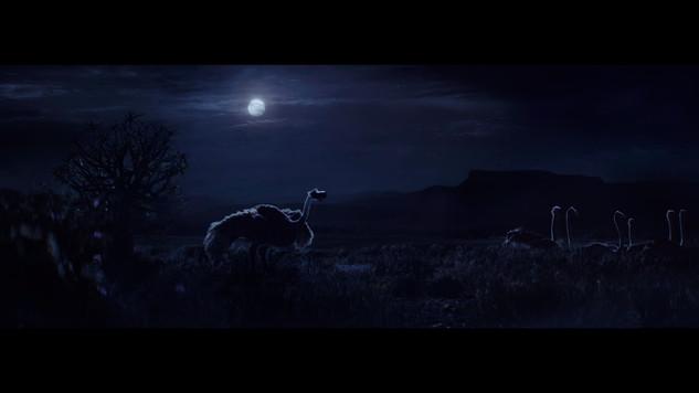 ostrich_1.8.1.jpg