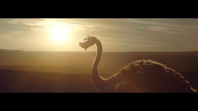 ostrich_1.7.1.jpg