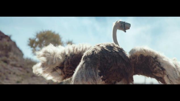 ostrich_1.2.1.jpg