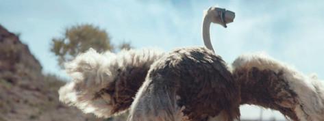Ostrich | TVC