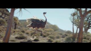ostrich_1.4.1.jpg