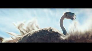 ostrich_1.3.1.jpg