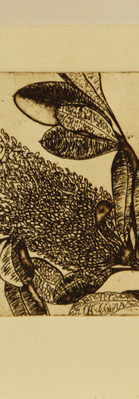 Banksia by Wendy Dossetor