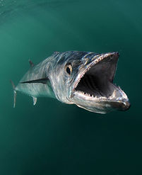 fish open mouth.jpg