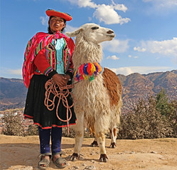 Womens ADventure Travels-Cusco-Peru-llam