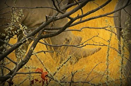 Golden Eye,  Namibia