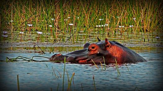 Side Eye, Botswana