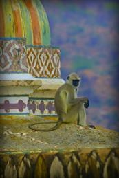 Monkey See, India