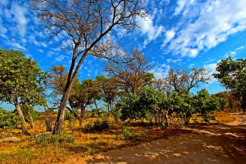 Womens Adventure Travel, solo travel for women, all women safaris in africa, badass, all women safaris in botswana, karen loftus
