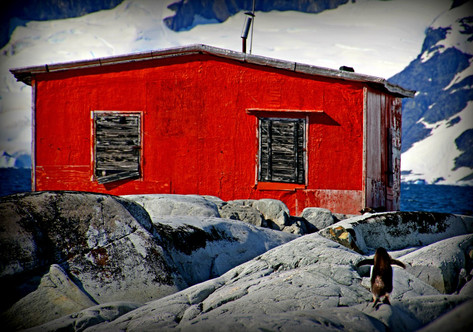 Rockhopper, Antarctica