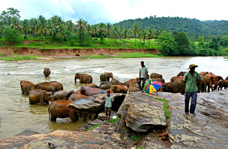 Bath Time, Sri Lanka