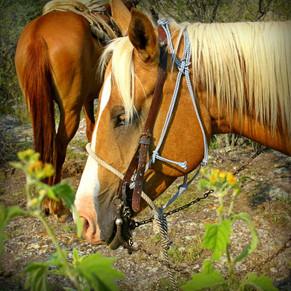 Equine Beauty, San Miguel Allende, Mexico