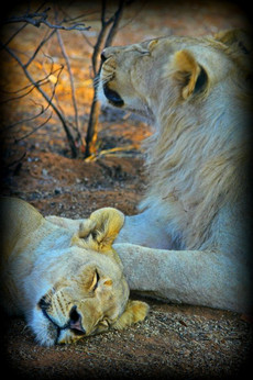 Brotherly Love, Namibia