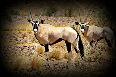 Double Take, Namibia