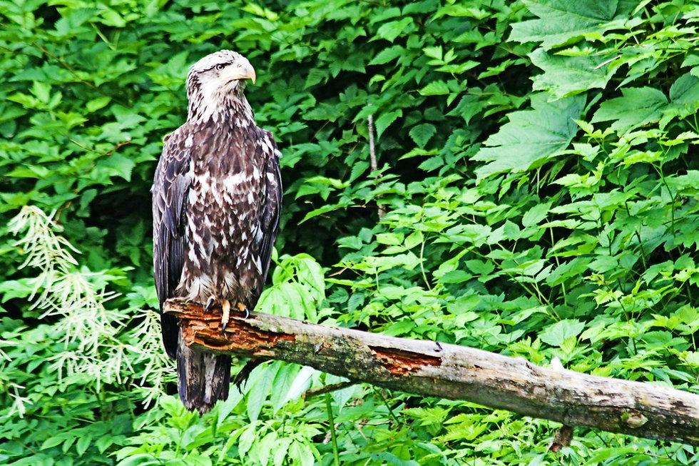 Alaskian Wildlife, Alaska Adventure, Alaska, Travel, Women's Adventure travels, Karen Loftus