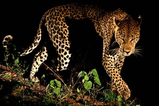 Shadow Dancer, South Africa