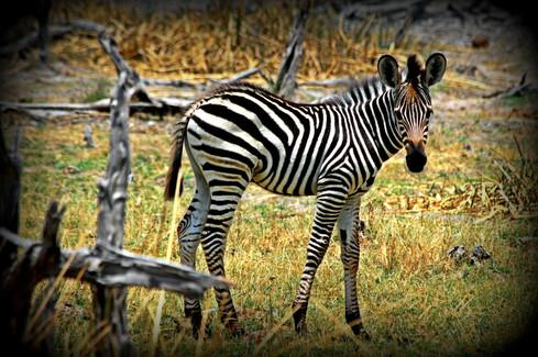 Freeze Frame, Botswana