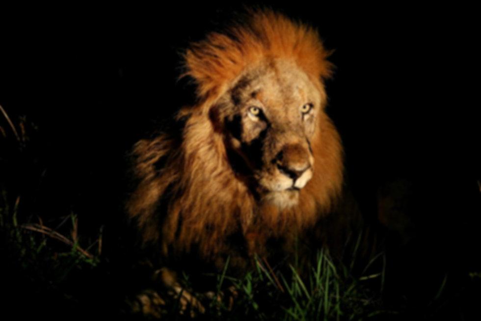 Womens Adventure Travel, solo travel for women, all women safaris in africa, badass, all women safaris in botswana, karn loftus
