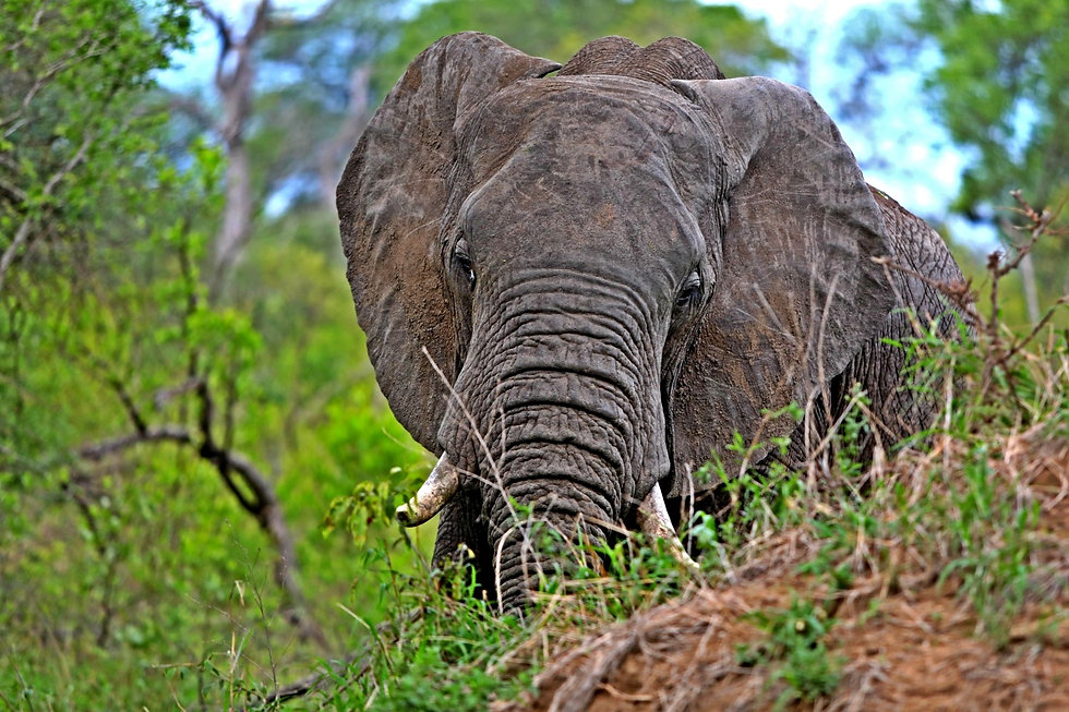 Womens Adventure Travel, solo travel for women, women safaris, Women travel to zambia, womens travel to africa