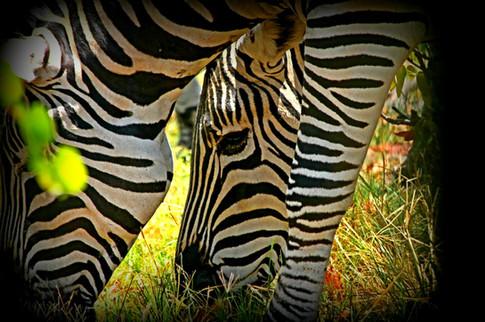 Black & White, Tanzania