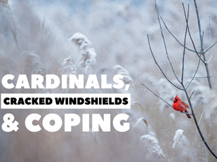 Cardinals, Cracked Windshields & Coping