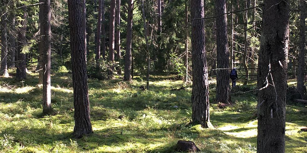 Rösjöskogen - Varmt välkommen till välgörande skogsbad i kvällningen!