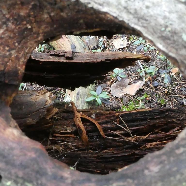 Sättra reservatet - Upplev Skogsbad under fullmånen