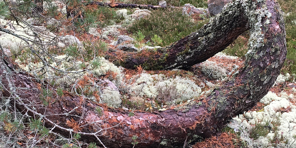 Södra Törnskogen - Avslappnande och återhämtande kvälls skogsbad