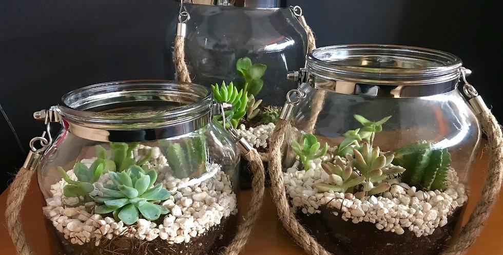 Mini Garden Farol