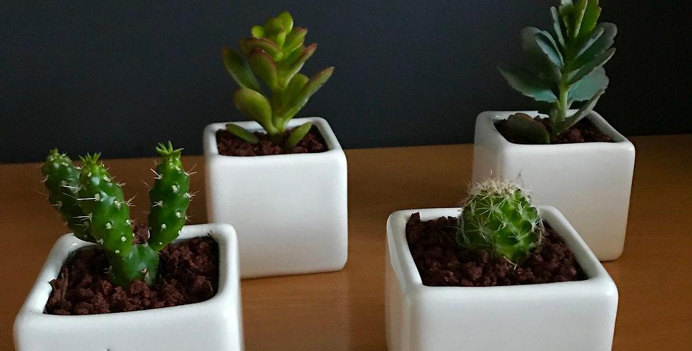 Mini Garden Cubo