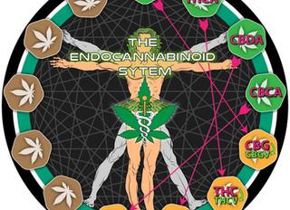 Acidic Cannabinoids
