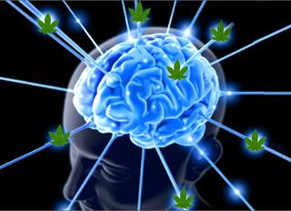 Brain Extraordinaire!