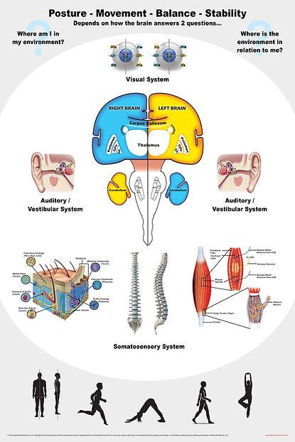 Neurology Dry-Erase poster: PMBS (Posture-Movement-Balance-Stability)
