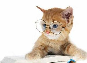 gatocomoculos.jpg