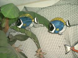 FISH 022.jpg