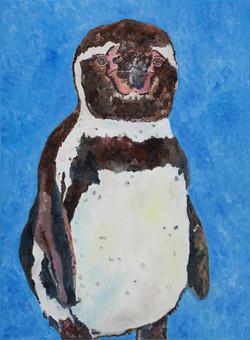 Humboldt Penguin 01