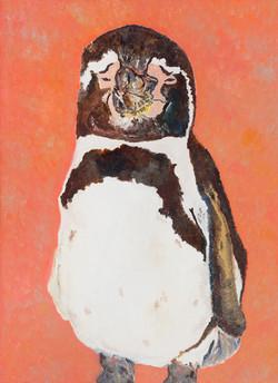 Humboldt Penguin 02