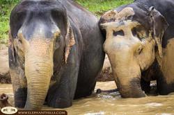Elephant Hills Camp Mud time