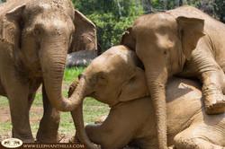 Elephant Hills Camp Family Love