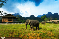 Elephant Hills Camp Soak up the Sun Time